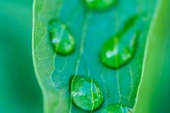 Las gotas de lluvia en subieron las hojas Fotos de archivo libres de regalías