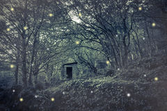 Las hadas contienen en la madera Foto de archivo libre de regalías
