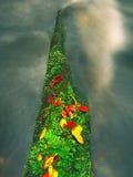 Las hayas anaranjadas y amarillas se van en la rama, agua clara que corre el árbol caido abajo Foto de archivo libre de regalías