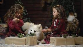 Las hermanas se están sentando en un cuarto con los regalos, sosteniendo nieve en sus brazos mientras que un perro bigSamoyed se  almacen de video