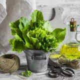 Las hierbas frescas del jardín en un metal bucket, el aceite de oliva, tijeras viejas del vintage en un fondo de madera ligero Imagenes de archivo