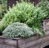 Las hierbas plantan en la cama levantada del jardín Imagen de archivo libre de regalías