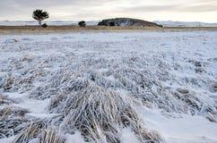 Las hierbas son nieve cubierta en la costa del lago Baikal con el árbol y la colina Imagen de archivo libre de regalías