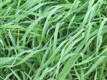 Las hierbas verdes en el jardín del patio trasero son cubiertas por el hielo hermoso y el agua está cayendo Foto de archivo