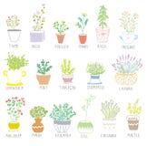 Las hierbas y las especias fijaron en potes con las flores Fotografía de archivo libre de regalías