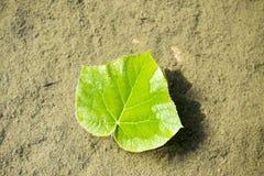 Las hojas Fotografía de archivo libre de regalías