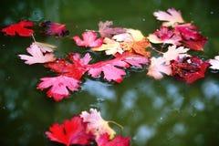 Las hojas abscissed hermosas encubrieron la agua fría oscura del río del otoño imagenes de archivo