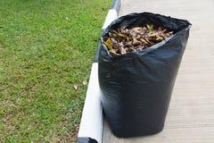Las hojas adentro reciclan el bolso Fotografía de archivo