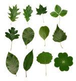 Las hojas aislaron Imagenes de archivo