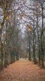 Las hojas alfombran en el bosque Fotos de archivo