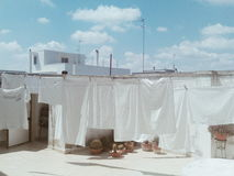 Las hojas blancas se secan debajo del sol caliente Fotografía de archivo