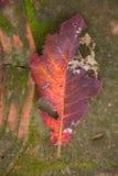 Las hojas caen abajo en el piso del cemento con el musgo Fotografía de archivo