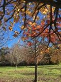 Las hojas caen abajo en la estación del invierno Imágenes de archivo libres de regalías