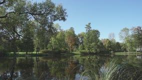 Las hojas caen de un árbol en agua en día soleado del verano Paisaje del lago del bosque metrajes