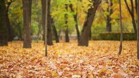 Las hojas caen en parque del otoño almacen de metraje de vídeo