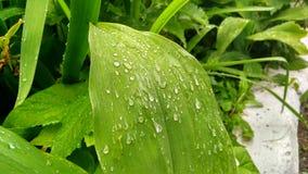 Las hojas caen la lluvia 03 verdes del agua 07 19 foto de archivo libre de regalías
