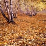 Las hojas caidas de oro Fotos de archivo