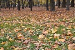 Las hojas caidas en la hierba en otoño parquean Fotos de archivo libres de regalías