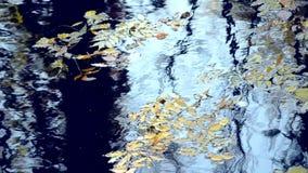 Las hojas caidas están en la superficie del agua almacen de video