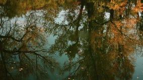 Las hojas caidas flotan en el río otoñal almacen de metraje de vídeo