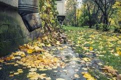 Las hojas caidas mienten debajo del tubo de desagüe después de la lluvia y en Imagen de archivo libre de regalías