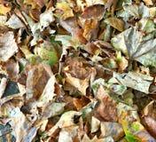 Las hojas caidas texturizan el fondo imágenes de archivo libres de regalías