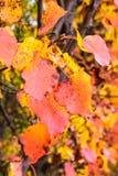 Las hojas coloridas de la caída capturaron en la tierra, extracto de las naturalezas imagenes de archivo