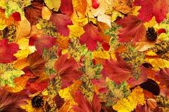 Las hojas coloridas del otoño sazonan caído en fondo Foto de archivo