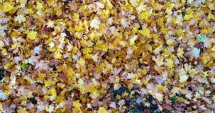 Las hojas coloridas dispersan del viento metrajes