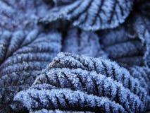 Las hojas congeladas Fotos de archivo