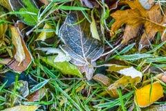 Las hojas congeladas coloridas de la caída capturaron en la tierra, extracto de las naturalezas Foto de archivo libre de regalías