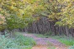Las hojas consiguen diverso color y caer abajo en el Oostvaardersplassen en los Países Bajos Imagenes de archivo