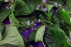 Las hojas creativas de la naturaleza presentan El concepto natural estupendo, ultravioleta colorea el fondo, estilo de la moda Fotos de archivo libres de regalías