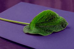 Las hojas creativas de la naturaleza presentan El concepto sobrenatural, ultravioleta colorea el fondo, estilo de la moda, verano Imagenes de archivo