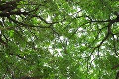 Las hojas cubren el cielo Foto de archivo libre de regalías