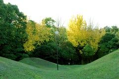 Las hojas de árboles eran color cambiado cuando viene el otoño Fotografía de archivo