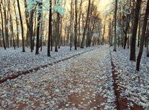 Las hojas de arce caen abajo y cubren la tierra, una foto infrarroja Fotos de archivo
