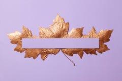 Las hojas de arce del color oro se separaron hacia fuera en un fondo violeta fotografía de archivo libre de regalías