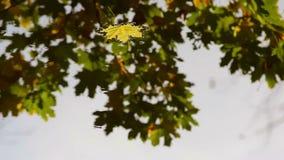 Las hojas de arce del otoño en el agua metrajes