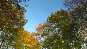 Las hojas de arce del otoño en el agua almacen de metraje de vídeo
