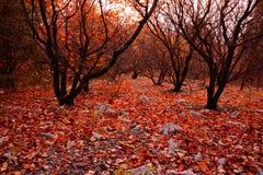 Las hojas de arce del otoño Lin Imagen de archivo libre de regalías