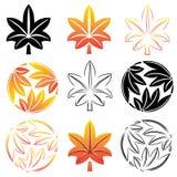 Las hojas de arce estilizadas del sistema, simbolismo japonés Ilustración Foto de archivo libre de regalías