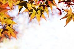Las hojas de arce forman una frontera Foto de archivo libre de regalías