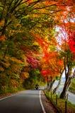 Las hojas de arce rojas caidas alinean el borde Imagen de archivo