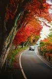 Las hojas de arce rojas caidas alinean el borde Fotos de archivo