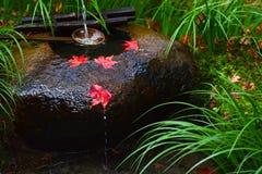 Las hojas de arce rojas del otoño descansan sobre un tsukubai, o el lavabo, en un templo japonés Fotos de archivo libres de regalías
