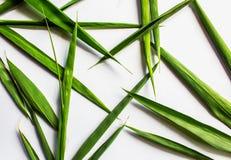 Las hojas de bambú son forma del corazón en el fondo blanco imagenes de archivo