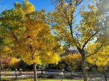 Las hojas de la caída dan vuelta y van cerca de madera Imagen de archivo libre de regalías