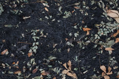 Las hojas de la ceniza después del fuego Fotos de archivo