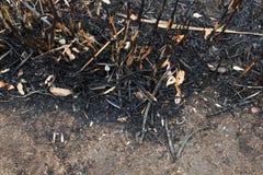 Las hojas de la ceniza después del fuego Fotos de archivo libres de regalías